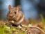 Aplikasi Pengusir Tikus Paling Ampuh Dan Efektif