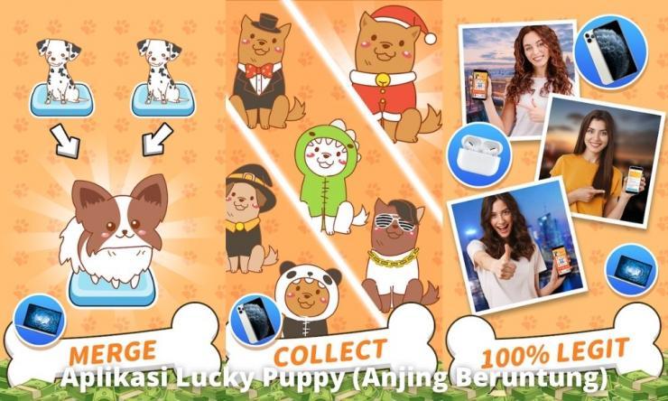 Aplikasi Lucky Puppy (anjing Beruntung) Penghasil Uang Dengan Misi